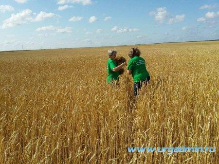 Апробация на всех сортовых посевах