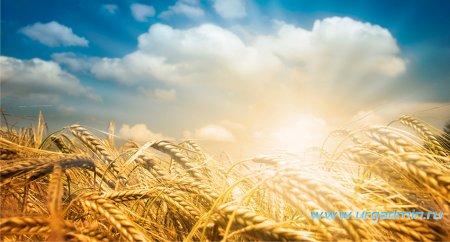 С профессиональным праздником, аграрии Юргамышского района!